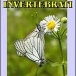 Il mondo di invertebrati